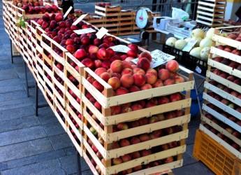 Cesena. Settore ortofrutta. Nel 2015 crescono i volumi d'acquisto: più 3,7 per la frutta e 2,2 per ortaggi.