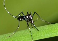 Riccione. Lotta alla zanzara tigre in corso. Interventi anche a giugno e a settembre.