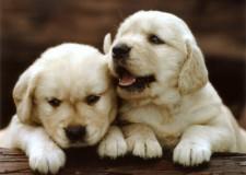 Ravenna. Cuccioli di cane abbandonati e sospetto avvelenamento di gatti.