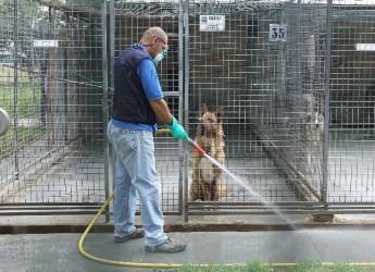 Rimini. Animali. Al canile Cerni sono andate a lieto fine 71 adozioni di cani e 160 di gatti.