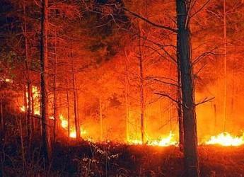 Pericolo incendi? A Cesena due ordinanze per evitare incendi nei boschi e in aree urbane incolte.