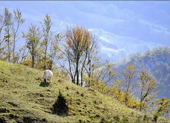 Emilia Romagna. Altri 5 milioni di euro all'anno per rafforzare la qualità della vita in montagna.