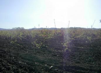 Emilia Romagna. Valori positivi, rispetto per l'ambiente e cibo sano: è la campagna!