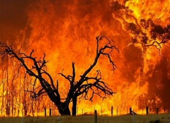 Emilia Romagna. Stato di grave pericolosità per gli incendi boschivi: da oggi.