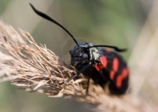 Ausl Cesena. Salute&Vacanza. Punture di insetti e animali? Ecco il vademecum per un'estate sicura.