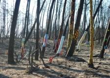 Emilia Romagna. Lutto civico per la pineta di Lido di Dante. Con l'omaggio degli alberi dipinti.