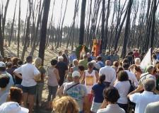 Emilia Romagna. Ravenna e il lutto per la Pineta. Matteucci: ' Ma la nostra Pineta rinascerà !'.
