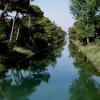 Cervia. Gli operatori balneari della Cooperativa Bagnini hanno contribuito alla ricostruzione della 'pinetina' di Pinarella.