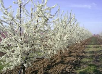 Emilia Romagna. Le sfide dell'agricoltura: ricerca e innovazione sono indispensabili.