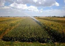 Cesena. Oltre 1,2milioni di metri quadri torneranno agricoli, la variante di salvaguardia verso l'approvazione, si punterà sulla riqualificazione e rigenerazione urbana.