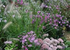 Arriva l'autunno con la magia dei suoi colori: cosa propone Giardini d'Autore di Riccione?