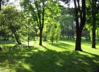 Riccione. Dopo il gran caldo prosegue la manutenzione delle aree verdi sul territorio comunale, anche grazie all'aiuto dei volontari.