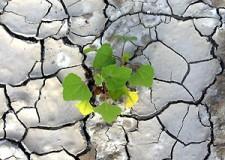 Emilia Romagna. Siccità, Rabboni: 'Le aziende agricole hanno bisogno di risorse adeguate e tempestive'.