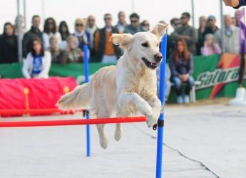 Emilia Romagna. Cani 'padroni' della spiaggia nel weekend 'Sport e cultura a 4 zampe' a Cervia.
