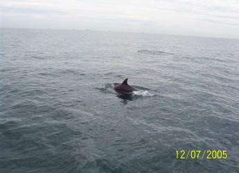 Emilia Romagna. Da Cesenatico, un grido d'allarme. Delfini, tartarughe e squali a rischio.