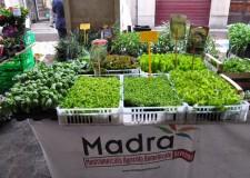 Tv. Agricoltura fra tradizione e innovazione: al via la nuova stagione di 'Madra' a Ravenna.