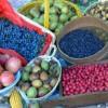 Casola Valsenio. Concorso fotografico promosso dal Circolo cittadino dedicato ai frutti dimenticati.