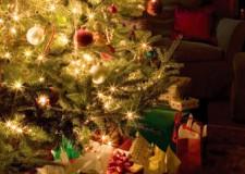 Ravenna. Albero di Natale in piazza grazie ad un cittadino, a Ceir e Gruppo Consar.