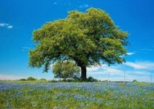 Emilia Romagna. Legambiente: 'Per cambiare aria in città pianta un albero con noi!'.