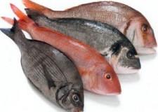 Emilia Romagna. Pesce & fiera: il prodotto ittico al centro di Mediterranean Sea Food Exhibition.