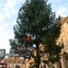 Emilia Romagna. Sabato 18, Rimini accende il suo Natale. Il grande albero di piazza Cavour..