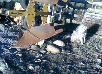Rimini. Maltrattamento animali: allevamento-lager di cane di razza maremmano.