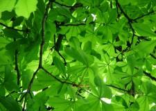 Cna Cesena.Crescere con la Green economy. Alla ricerca di idee e nuovi modi di comunicarle.