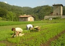Emilia Romagna. Meno burocrazia in Agricoltura: uno sportello e tanto altro.