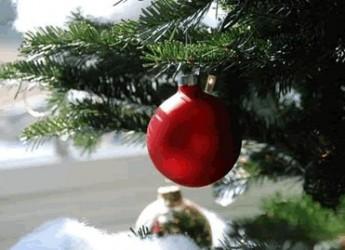 Ama l'ambiente! Anche dopo le feste! Diamo una seconda vita agli alberi di Natale.