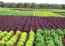 Parma. La denuncia di Legambiente: 'Ancora troppi pesticidi in agricoltura, danni per l'ambiente e la salute umana. Primato italiano per il consumo di prodotti chimici'.