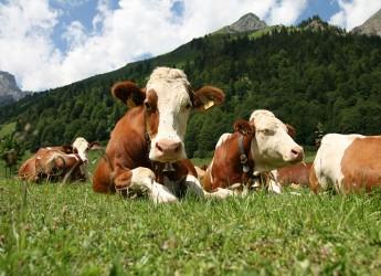 Emilia Romagna. Nitrati: la Regione ha incontrato gli allevatori.