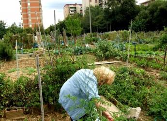 Forlì. Bando per l'assegnazione degli orti per anziani ultrasessantenni.
