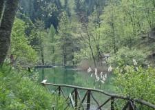 Emilia Romagna. Parco Foreste Casentinesi: 'si proceda alla nomina di Luca Santini presidente'