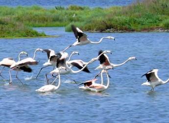 Ravenna. In canoa nel parco del Delta del Po nell'oasi naturalistica di Punta Alberete alla scoperta della natura e della cultura.