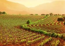 Emilia Romagna, dalla Regione 20 milioni di euro per aiutare le imprese agricole.