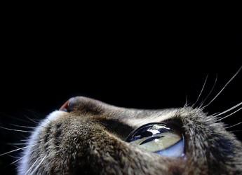 Giornata Nazionale del Gatto. Ecco perchè si festeggia il 17 febbraio.
