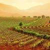 Emilia Romagna. Oltre 20 milioni di euro per la competitività dell'agroalimentare.