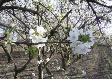 Italia. 3bmeteo.com. 'Da oggi impazza la primavera con l'alta pressione'.