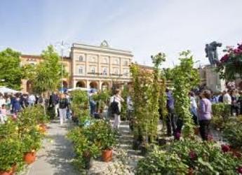 Santarcangelo. Al via gli eventi dedicati all'anteprima di Balconi Fioriti.
