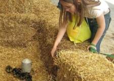 Forlì – Cesena. Fattorie aperte, ultime due domeniche per poter visitare le aziende agricole che aderiscono all'iniziativa.