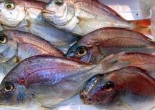 Italia. Allarme di Slow Fish: attenti al pesce dopato.