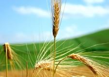 Forlì. 'Emilia Romagna regione d'Europa: la riconversione ecologica crea lavoro', incontro del Partito Democratico sul futuro del settore agricolo.