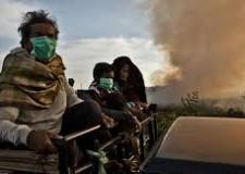 Greenpeace si scaglia contro l'olio di palma: 'La deforestazione causa lo smog'.