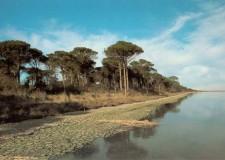 Ravenna. Nuovi argini e riescavo dei canali nel Chiaro del Pontazzo.