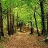 Forlì. Quattro progetti per la difesa del demanio forestale.
