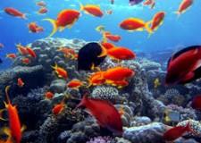 Il Mar Rosso è la meta preferita dagli italiani per le vacanze.
