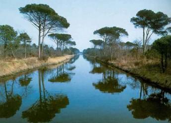 Ravenna. Al via 'Operazione occhio verde': cinque domeniche alla scoperta della pinete e della Piallassa Baiona.