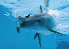 Fa discutere il 'caso' aperto dal trasferimento dei delfini. 'Niente Delfinario. Rimini ha già il suo mare!'