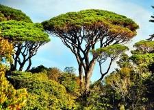 Ravenna. Ventuno nuovi alberi di privati tutelati dal Comune.