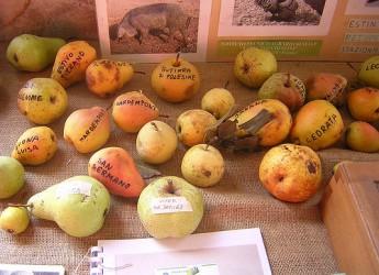 Casola Valsenio. Per la Festa degli Alberi l'inaugurazione del 'Parco delle Erbe e dei Frutti Dimenticati' lungo via Roma.